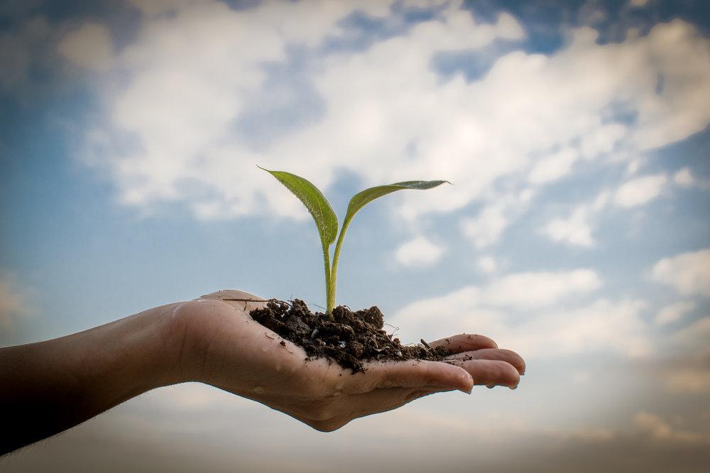 Hållbarhets- och miljöfrågor tar nu plats på allvar