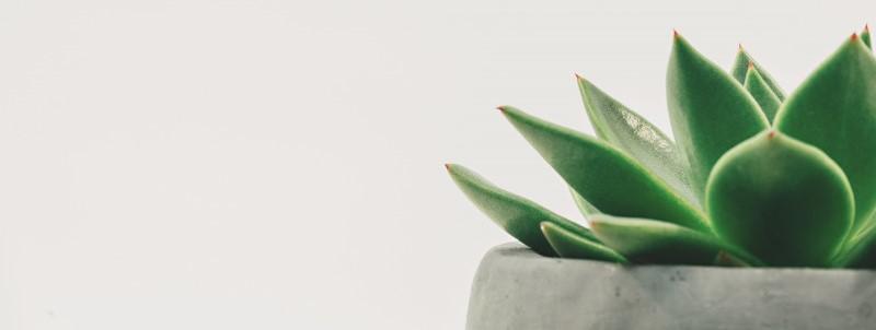 Een vetplantje op kantoor