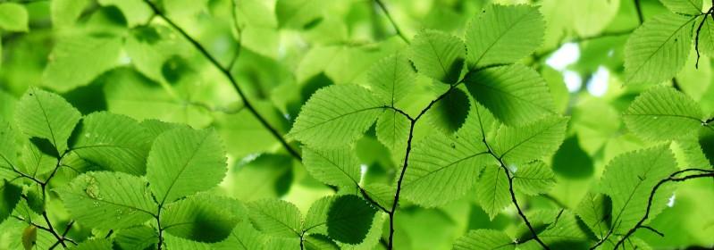 Een groen bladerdak