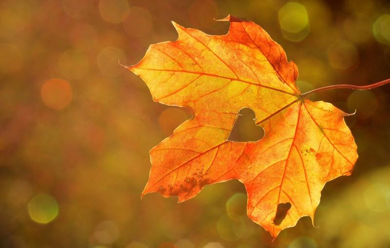 Herfstblad met hartvormige uitsnijding