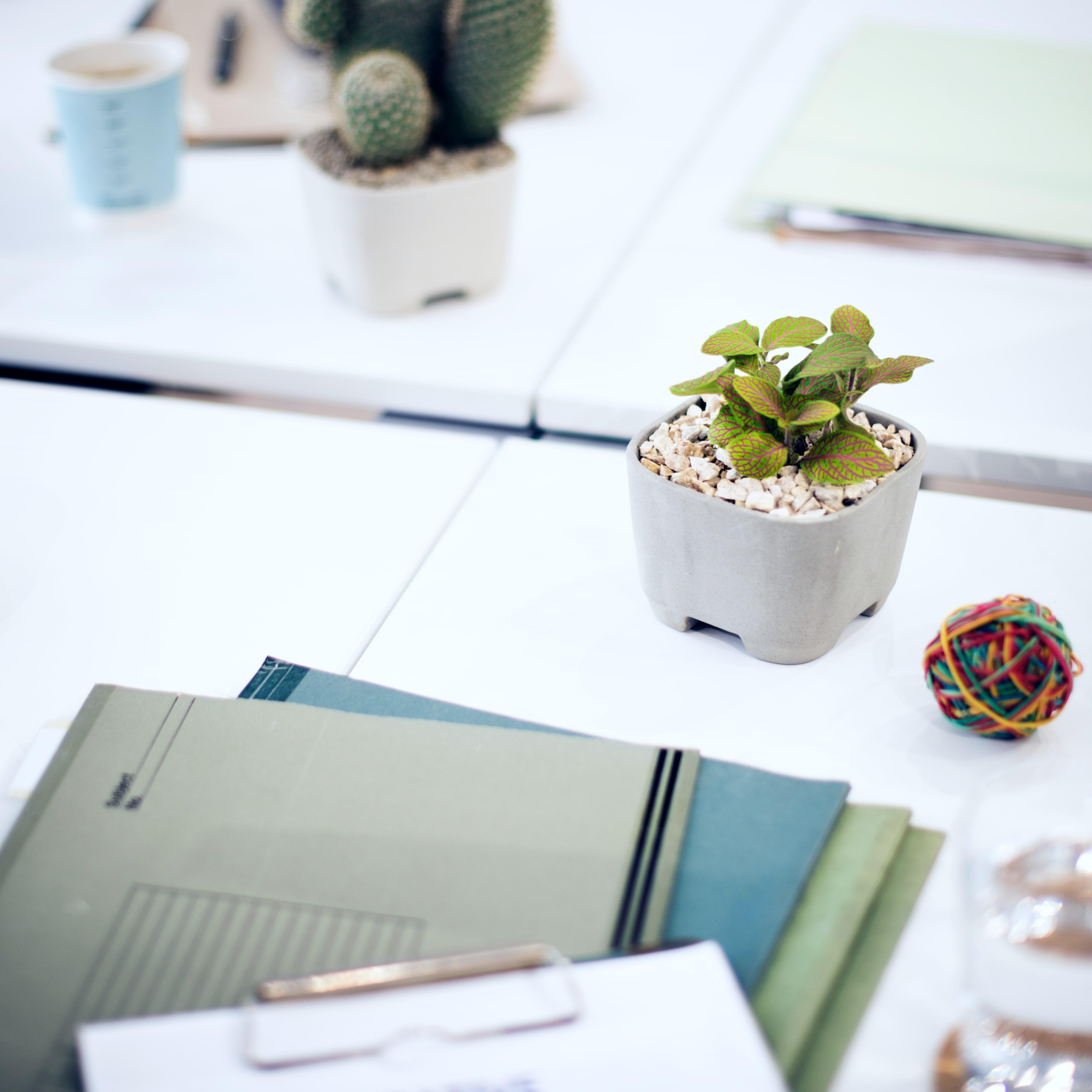 4 handige tips voor MKB's: zo organiseert u uw financiën